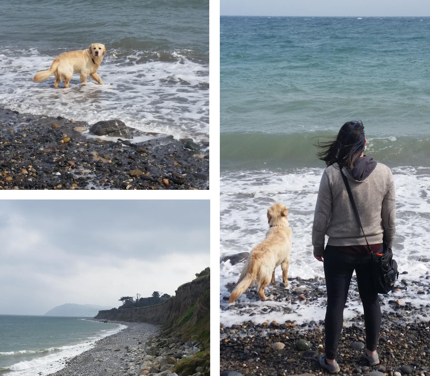 Killiney. Benji. Beaches.