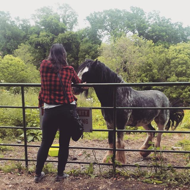 Poor lonely horsey.