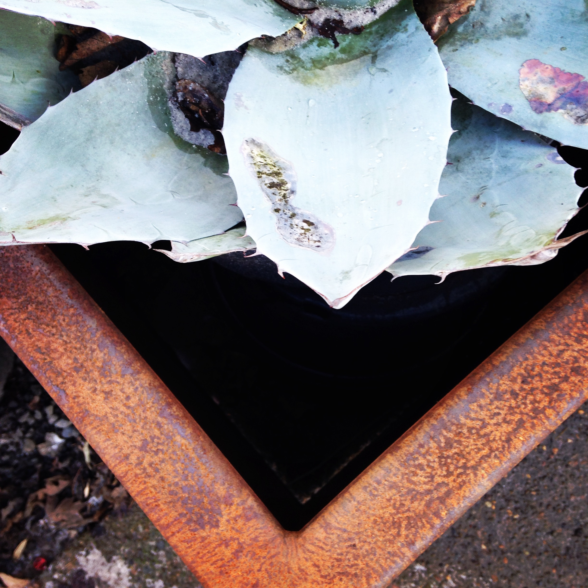 Corten Planter with Agave