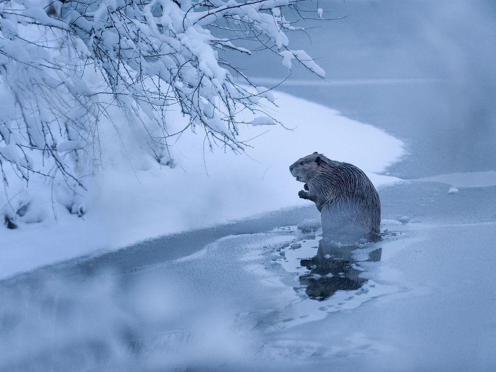 Photo credit:  John Warner  via National Geographic
