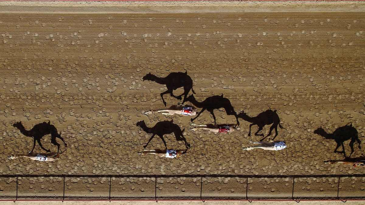 Al Marmoun camel racetrack, in Dubai, United Arab Emirates. Photo by Shoyab via Dronestagram.