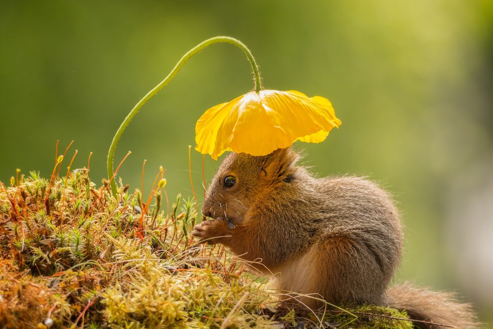 Photo credit: Geert Weggen via Smithsonian.com.