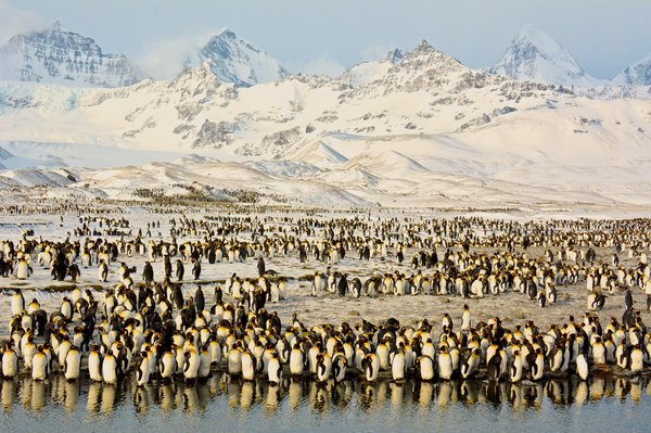 Title: Peaks & Penguins in Antarctic Sunrise, Photo credit: Shivesh R.