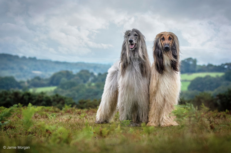 "1st Place Winner, Jamie Morgan, UK. ""The Dogs that Rocked – Elvis & Ozzie"""