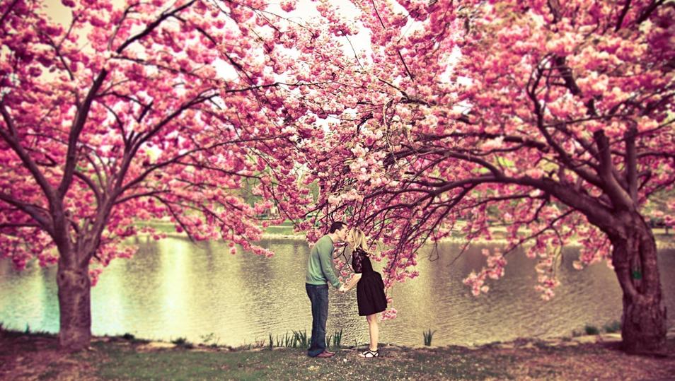 Kiss under a cherry blossom tree. Photo by:Korri Crowley