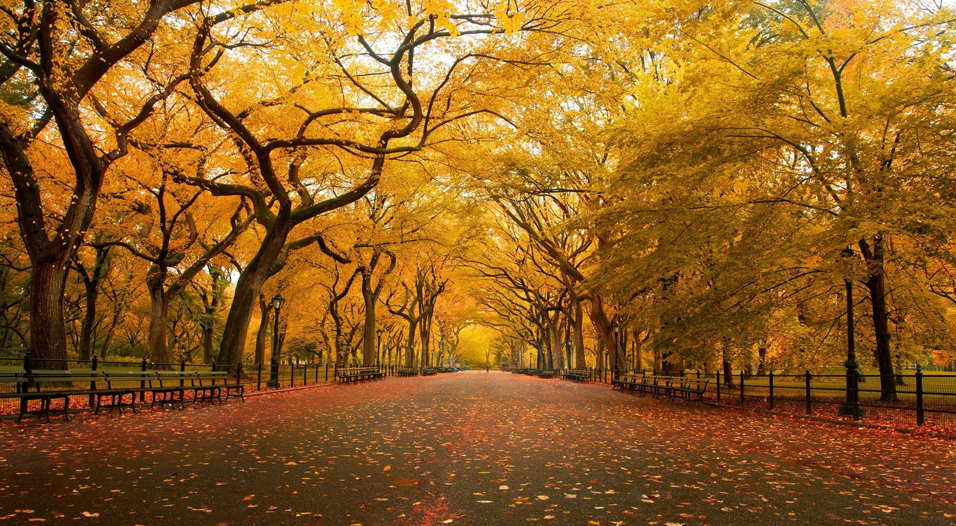 Yellow autumn in Central Park, New York. Photo by:Christopher Schoenbohm