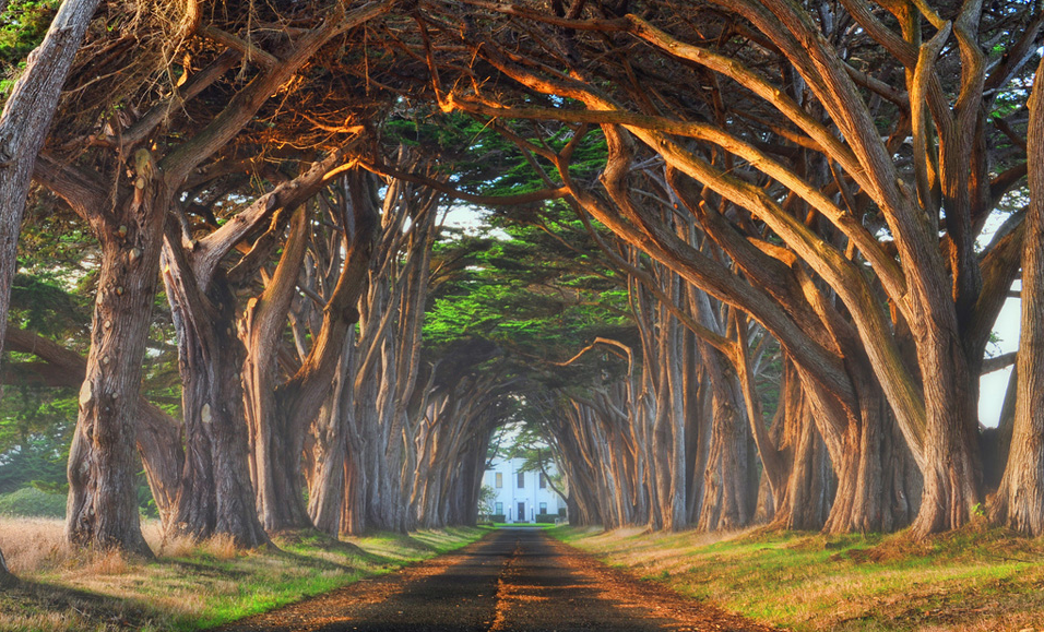 Natural tree tunnel, California. Photo by: unknown