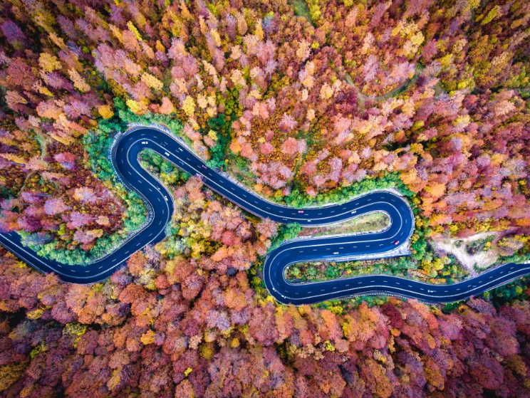 A curvy road winds through the Bogata Forest high up in the mountains of Romania. Photo credit: Calin-Andrei Stan