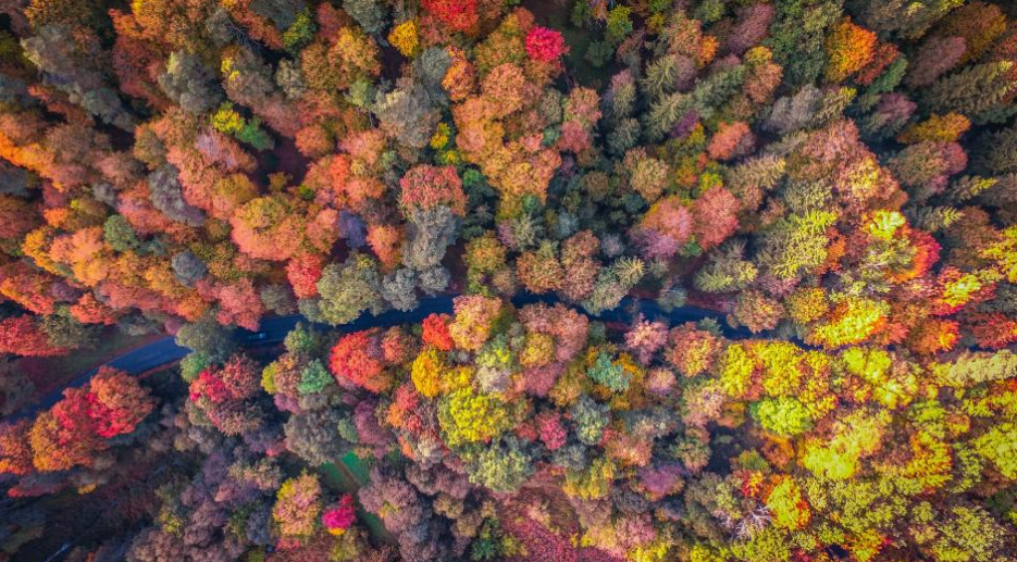 Autumn trees line a road in a forest in Vilnius, Lithuania. Photo credit: Vaias Geguzis
