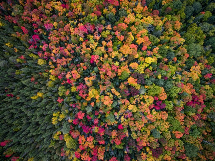 Fall colors cover the landscape in the wilderness of Ontario, Canada. Photo credit: Opspeculate Aerial Media