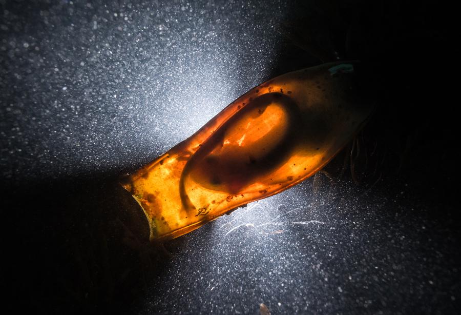 """""""Catshark Supernova."""" British Underwater Photographer of the Year, Title Winner. Photo credit:Dan Bolt"""