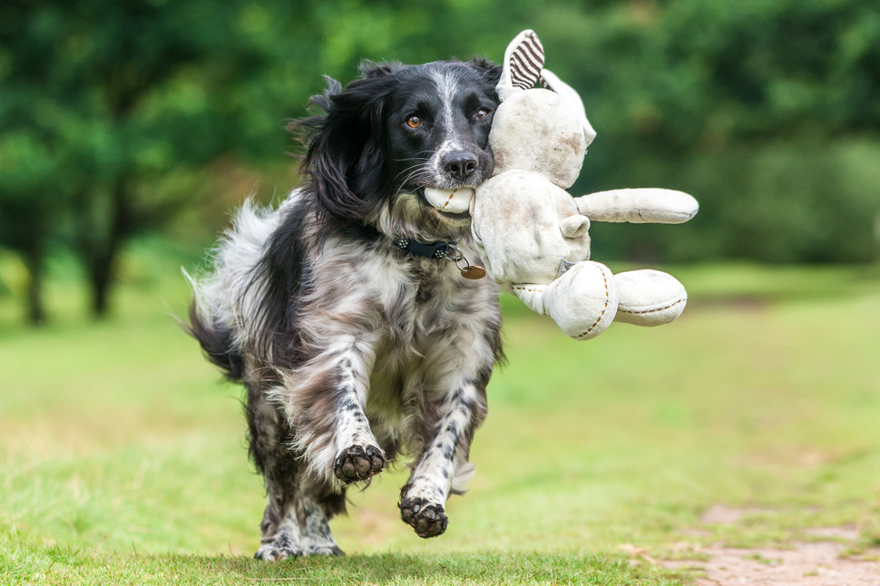 Dogs At Play Category.3rd place: Will Holdcroft