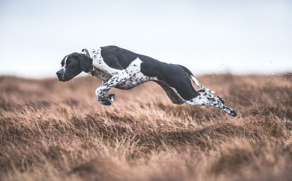 Dogs At Work Category.1st place: Sarah Caldecott