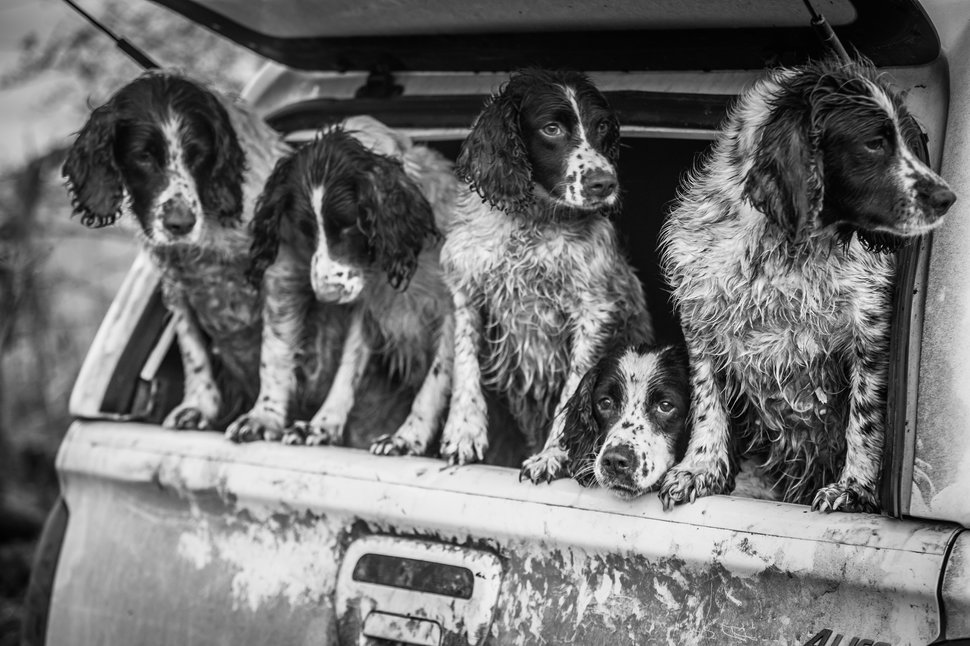 Dogs At Work Category. 2nd place: Lucy Charman