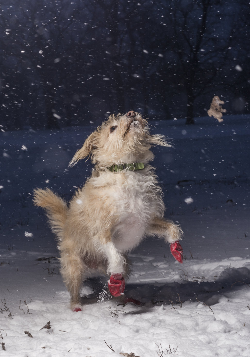 I Love Dogs Because Category.1st place:Julian Gottfried