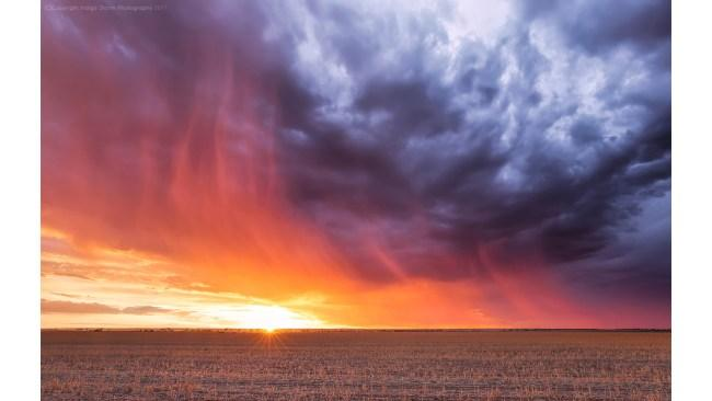 Captured on Mandiga Road between Koorda and Bencubbin. it passed over right on sunset creating this gorgeous backlit virga rain. Picture: Kylie Gee - Indigo Storm Photography