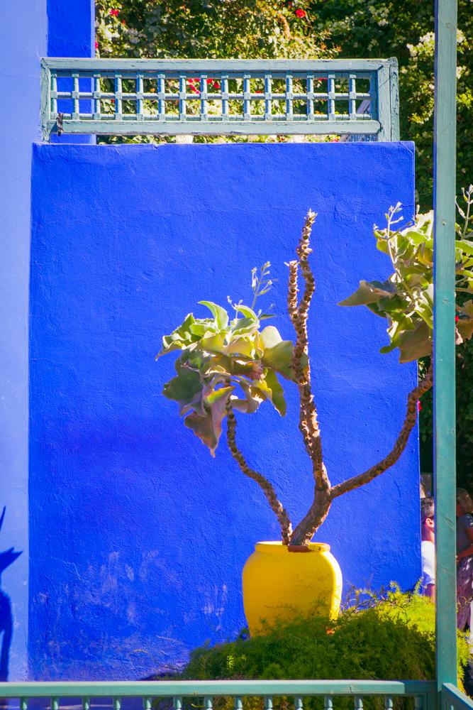 bluewallmoroccogarden.jpg