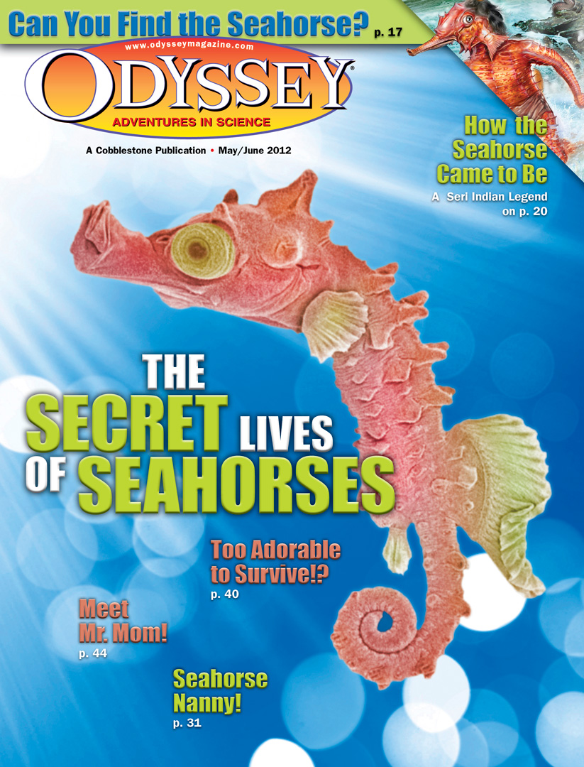 The Secret Lives of Seahorses