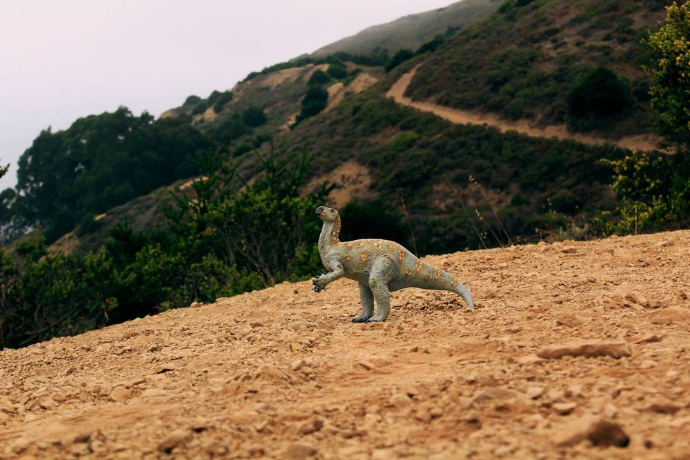 """Iguanadon    """"This photo was taken on a long eight or so mile hike. I like it for the depth of field. It almost makes the dinosaur seem real. There's been a resurgence in dinosaur toy photography since Jurassic World came out but I beat them to it!"""""""