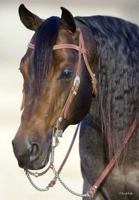 Oaxaca Chex from Brazile Quarter Horses