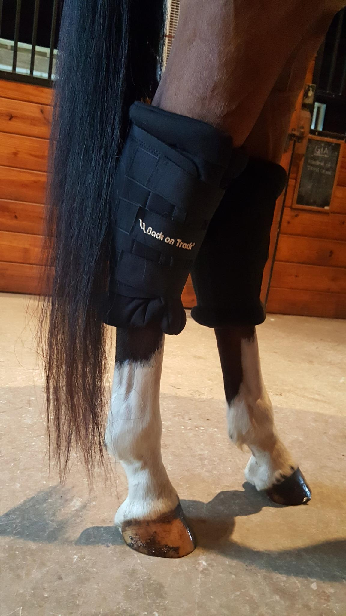 Did you know Back on Track USA makes Padded Hock Boots?