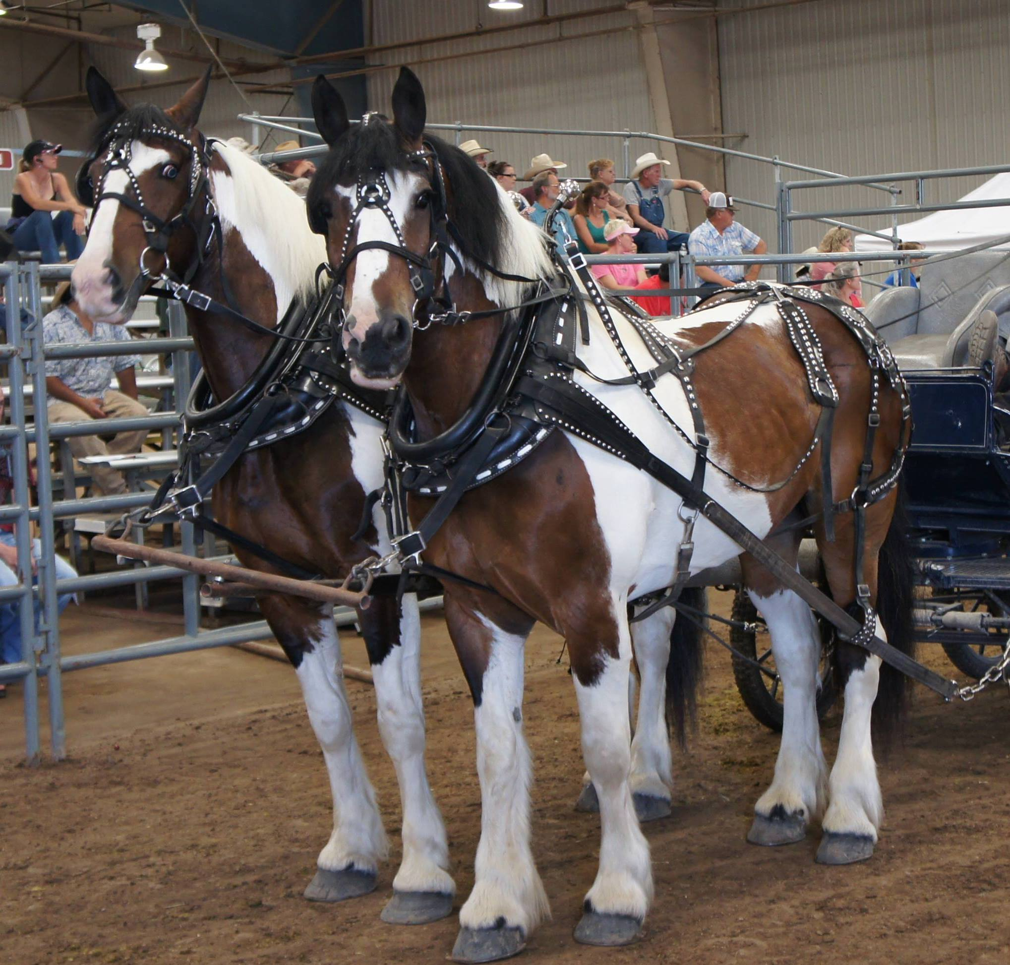 Harley D. Troyer Auctioneers, Inc. specializes in Draft Horses, Mules, Light Driving Horses, Carriages, Wagons, Harness, and all types of Horse-Drawn Farm Equipment.