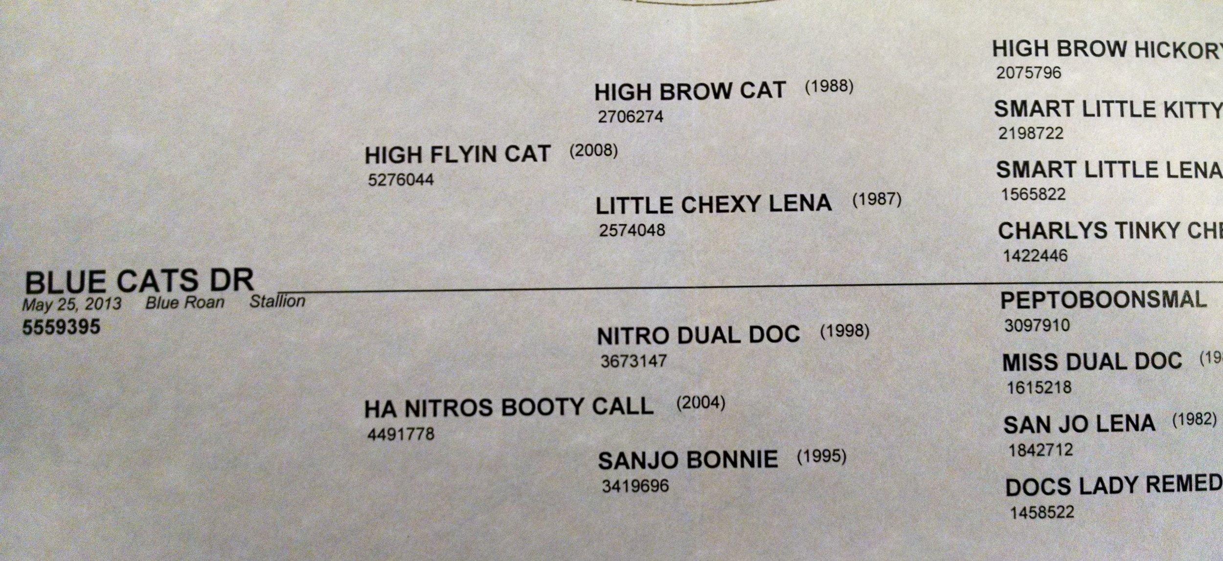 bule cats dr.jpg