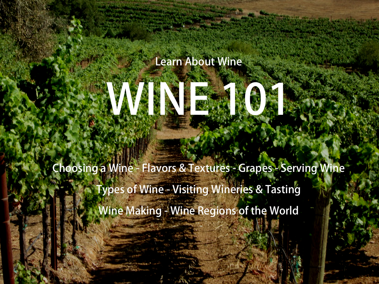 Wine 101 on Vineyard.jpg