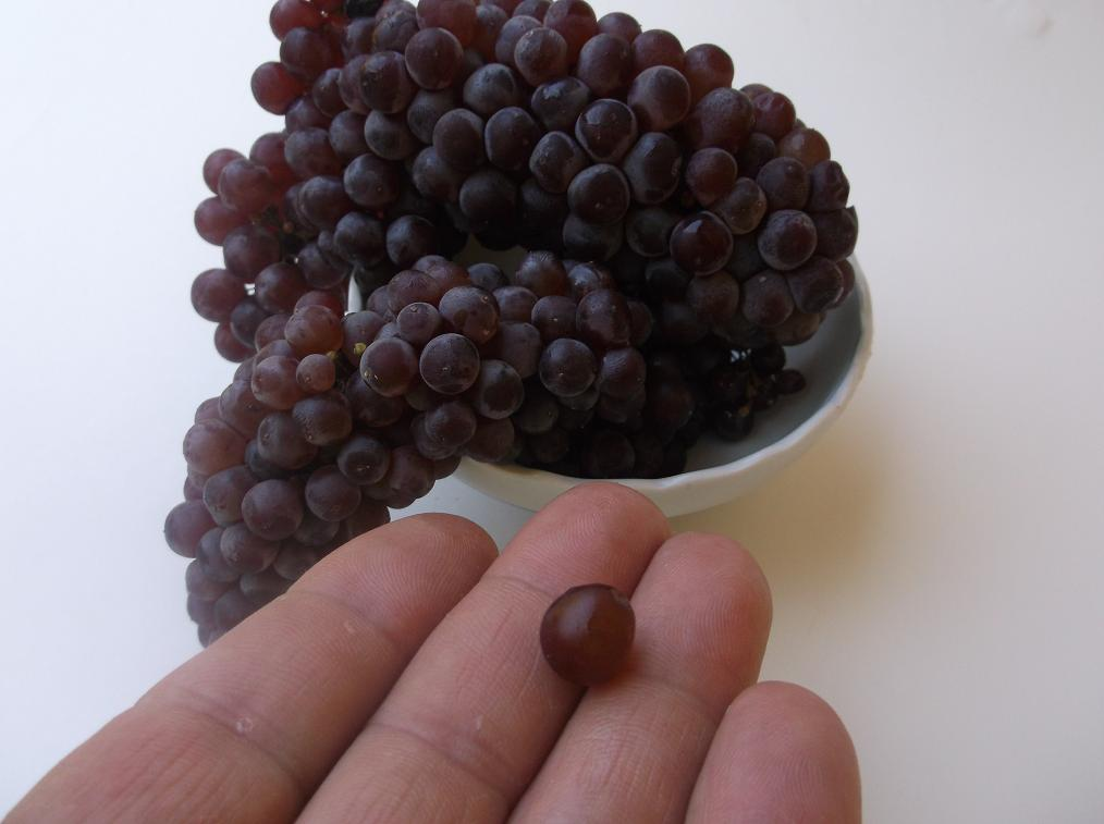 Champagne Grapes_2.JPG