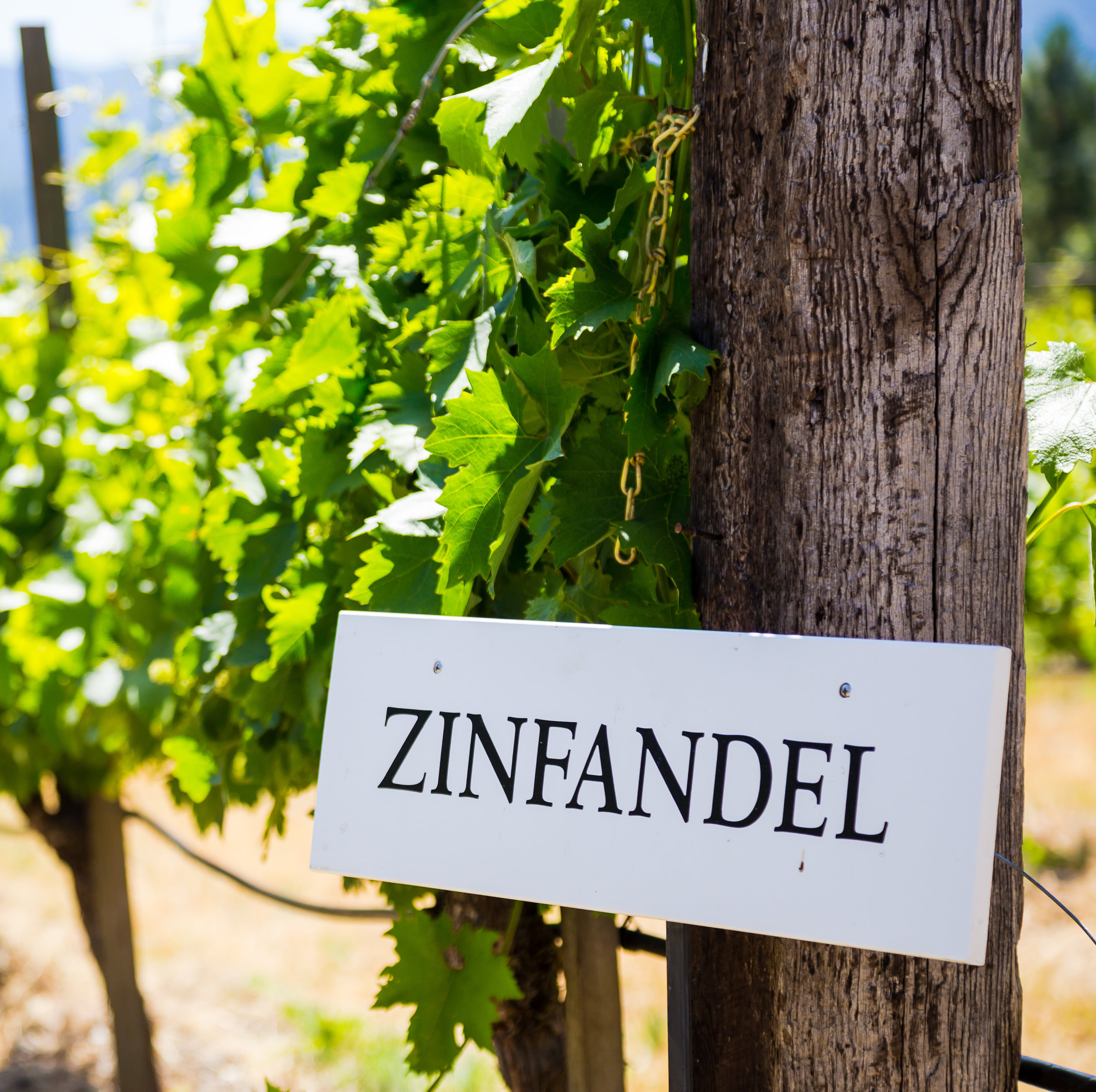 Zinfandel Vineyard Sign.jpg