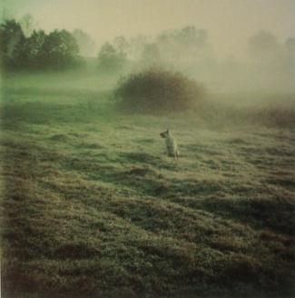 TarkovskyDog.jpg