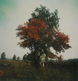 TarkovskyTree.jpg