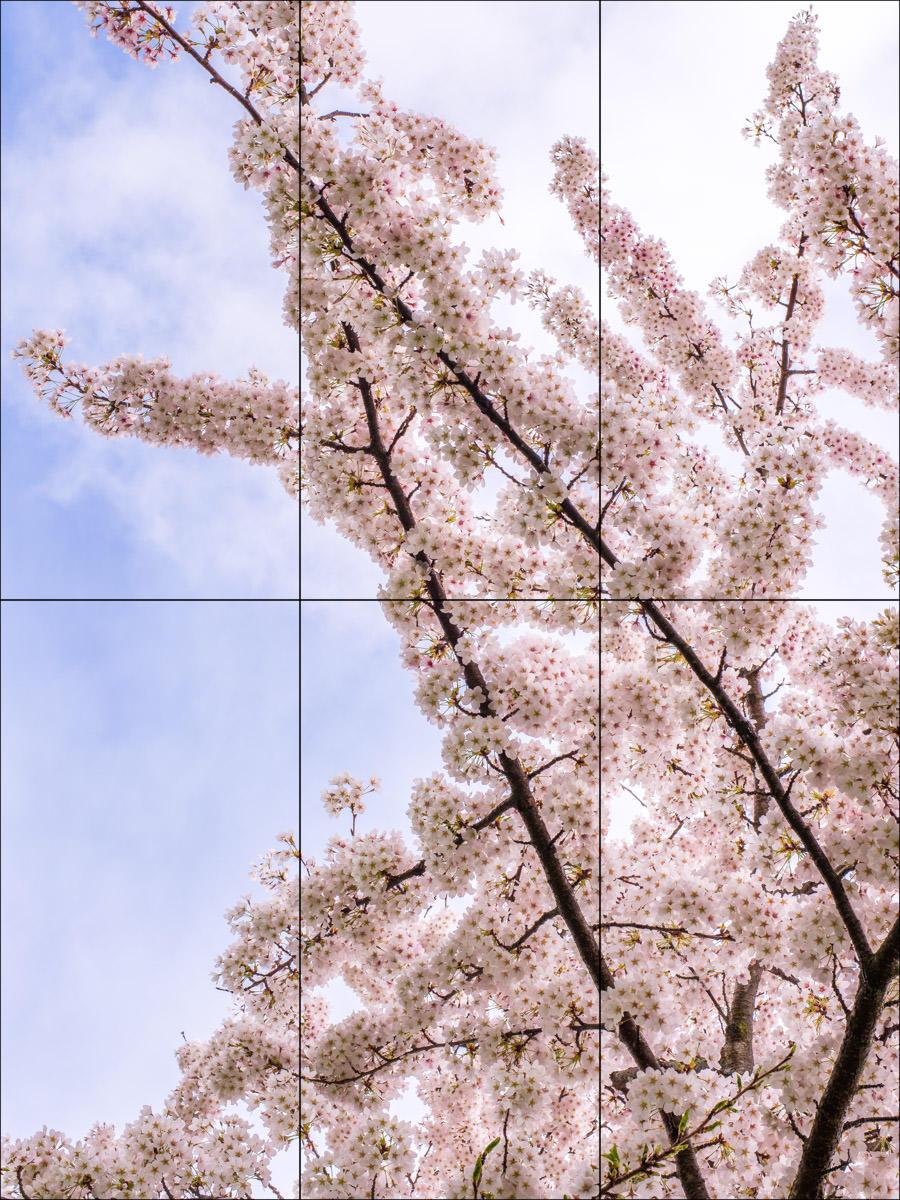 ACE_S1_0042.jpg
