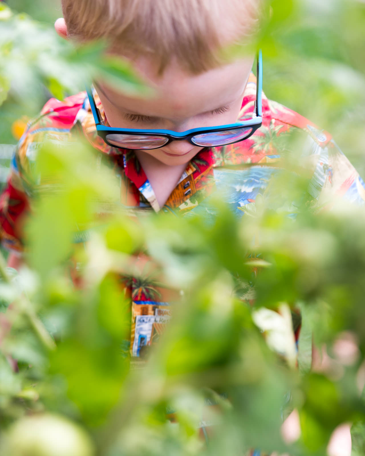 looking through the plants at young boy in home garden in caboolture