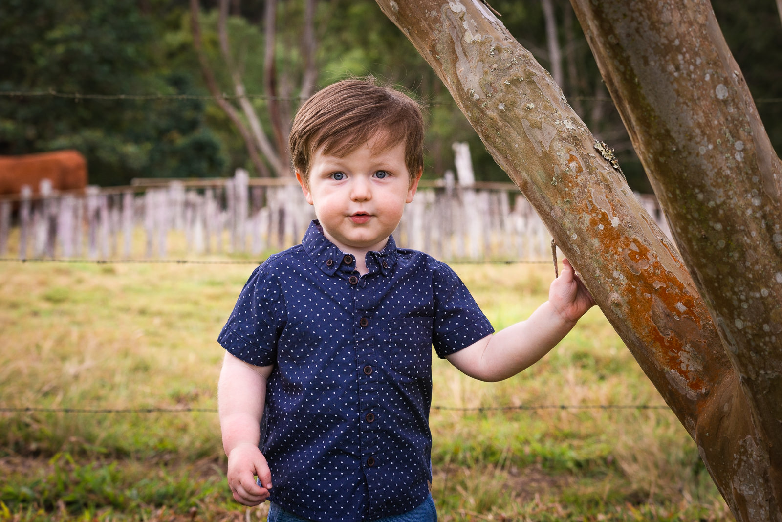 young boy standing at a tree during family photo session at beerwah