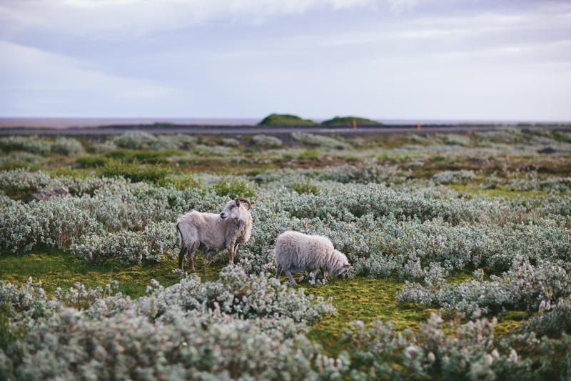 Iceland by Eva Kosmas Flores-141.jpg