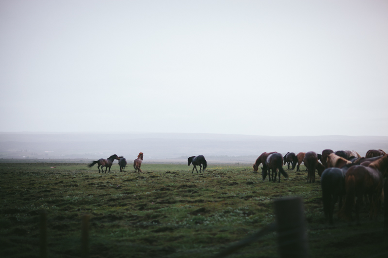 Iceland by Eva Kosmas Flores-60.jpg