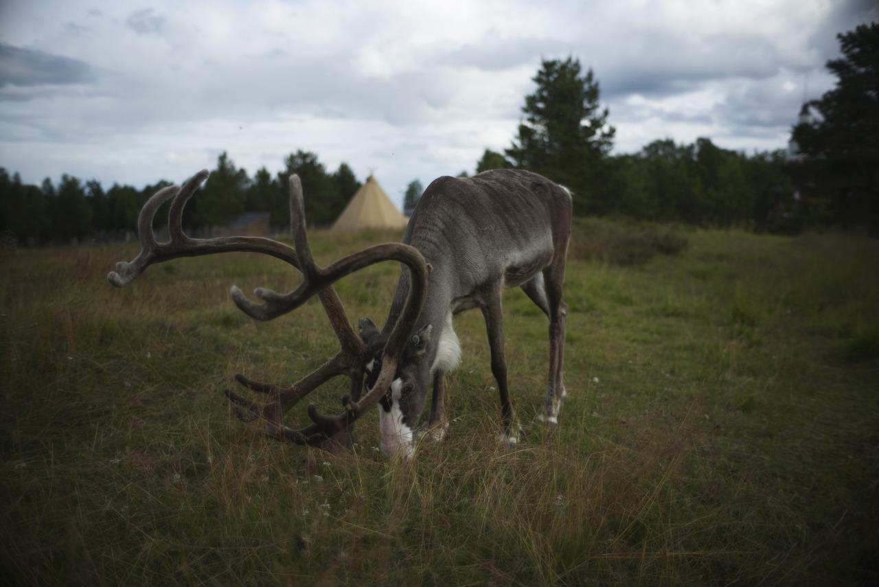 Jukkasjärvi, Lappland Sweden