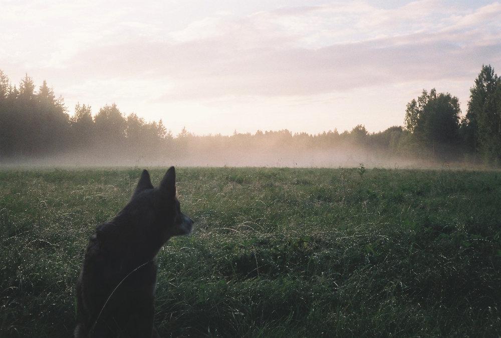 Ängesbyn, Norrbotten Sweden