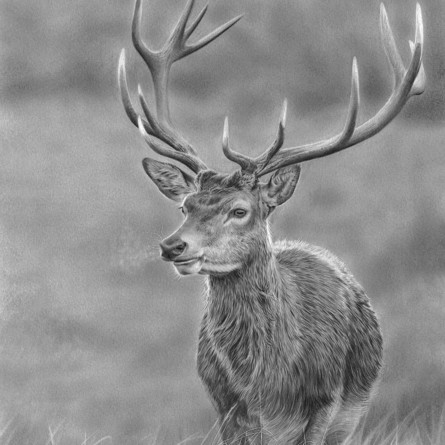 BRITISH WILDLIFE PRINTS -