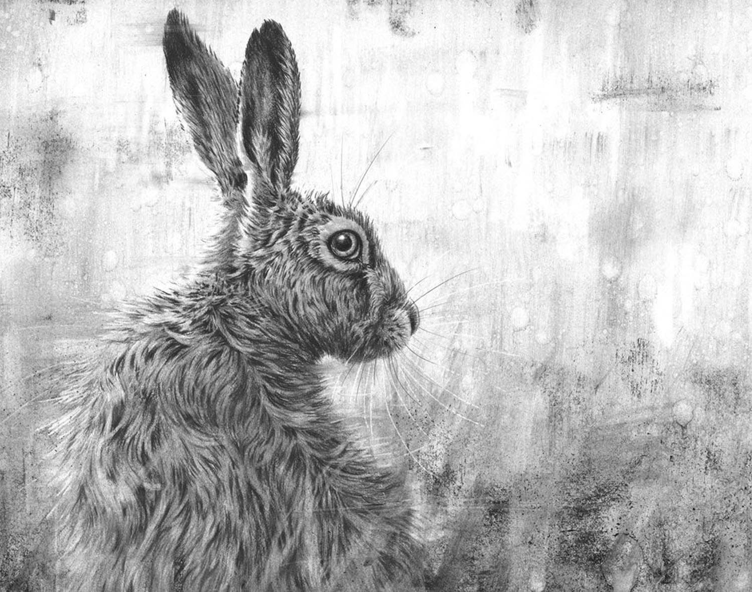Limited Edition Prints - Browse the various collections of limited edition prints, including hares, owls, British wildlife, farm animals and more