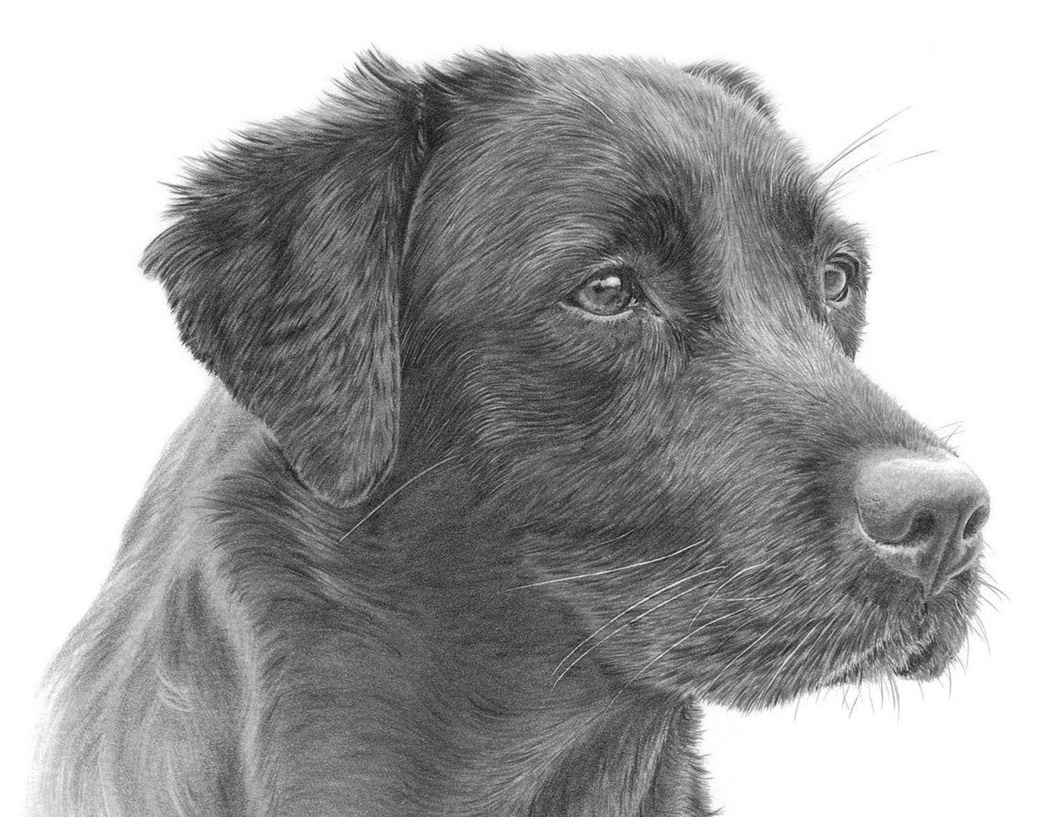 Dog Prints - Browse the collection of dog breeds, from Border Collies and Border Terriers, to Yorkies and Westies
