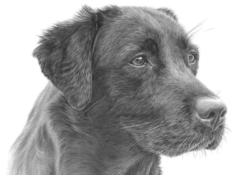 DOG PRINTS - SHOP NOW