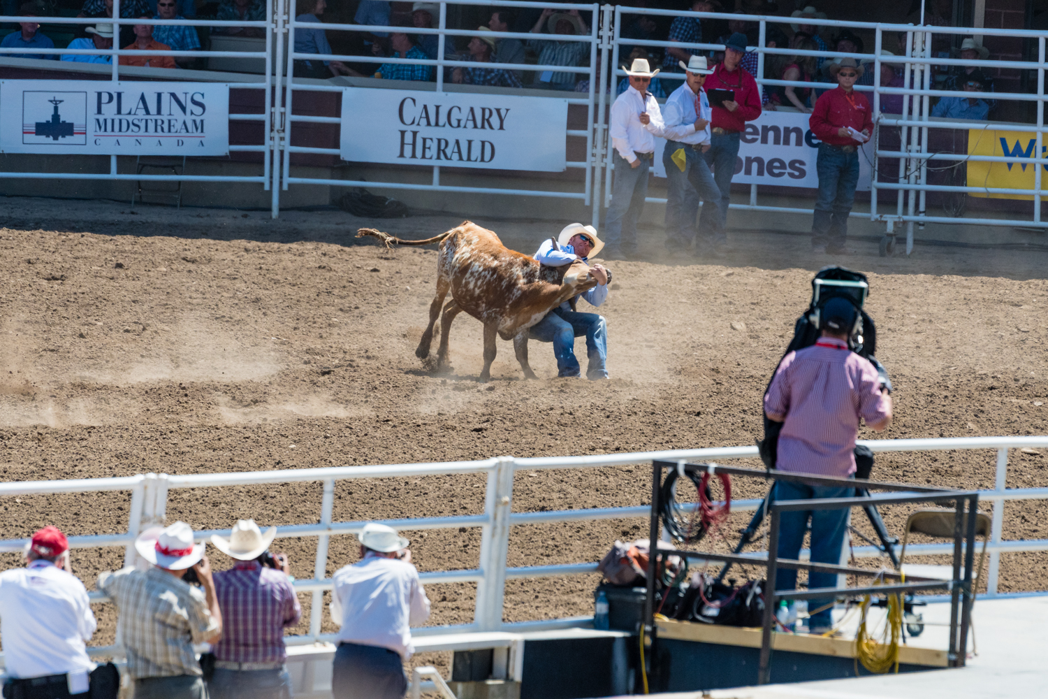 This was a timed event, with the timer stopping when the bull was fully flat on the ground.