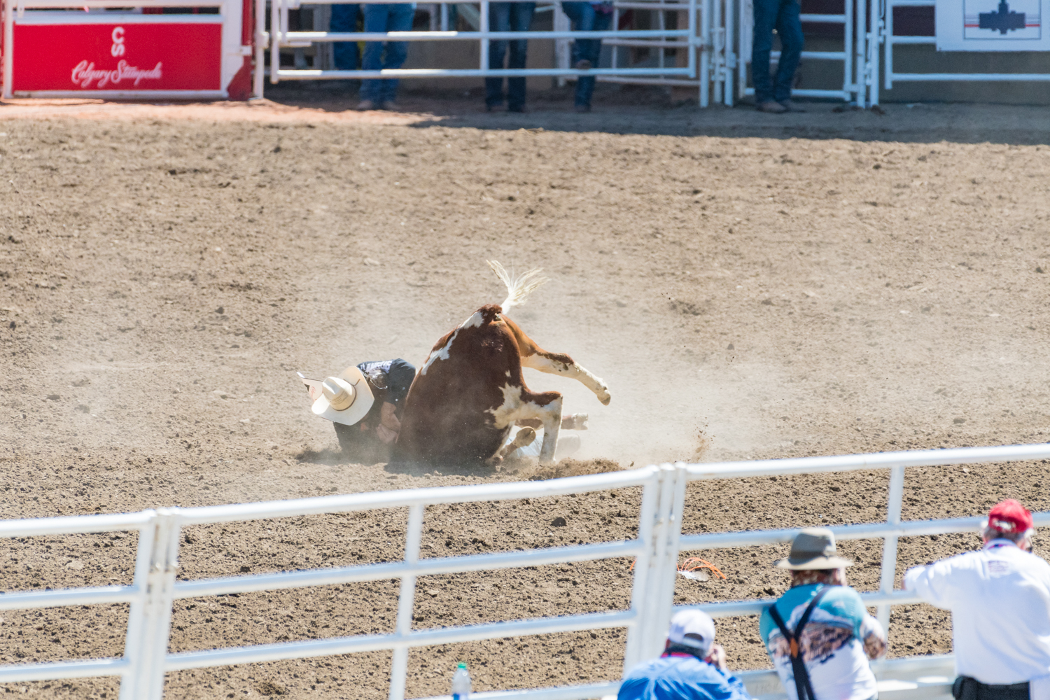 Some cowboys were able to knock the bulls straight down off the horse, others needed to use a bit more persuasion.