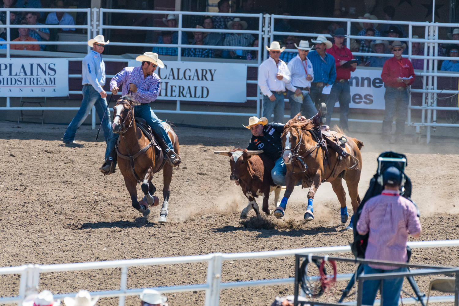 You could bring up the question of cruelty to the young bulls, although they didn't  seem  to mind. After they were knocked down the cowboy would let go and the bull would get up and continue to jog, with a almost slight look of confusion.