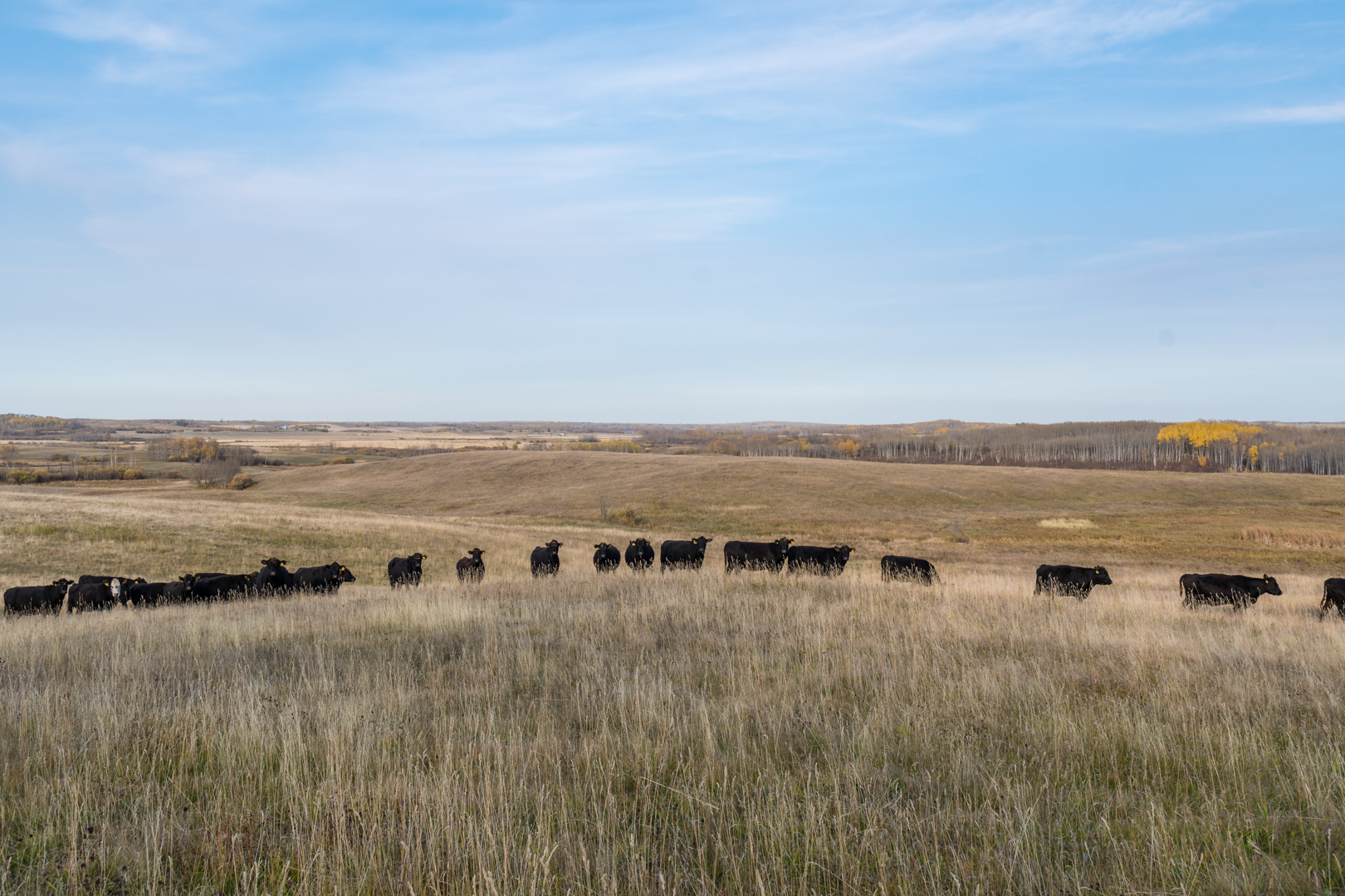 2017 10 11 9 Finger Ranch-37.jpg