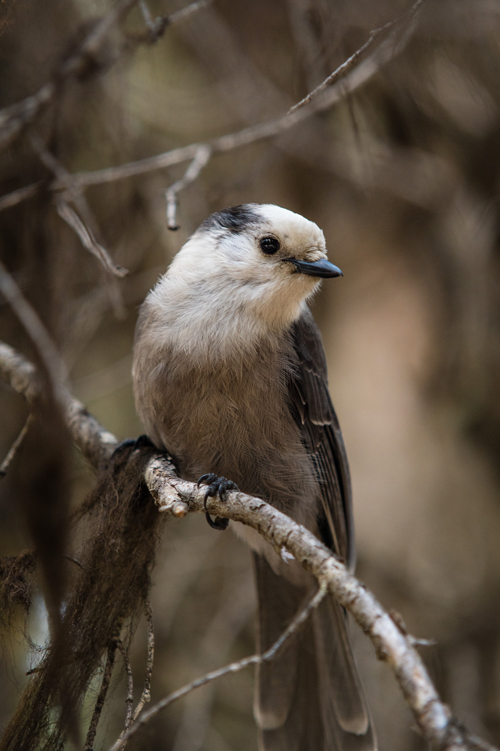 """A photo of a bird. I am not much of a """"birder"""" but I will take the occasional photo."""