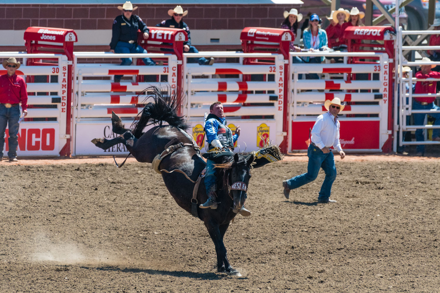 Some bloke rides a horse during the stampede.