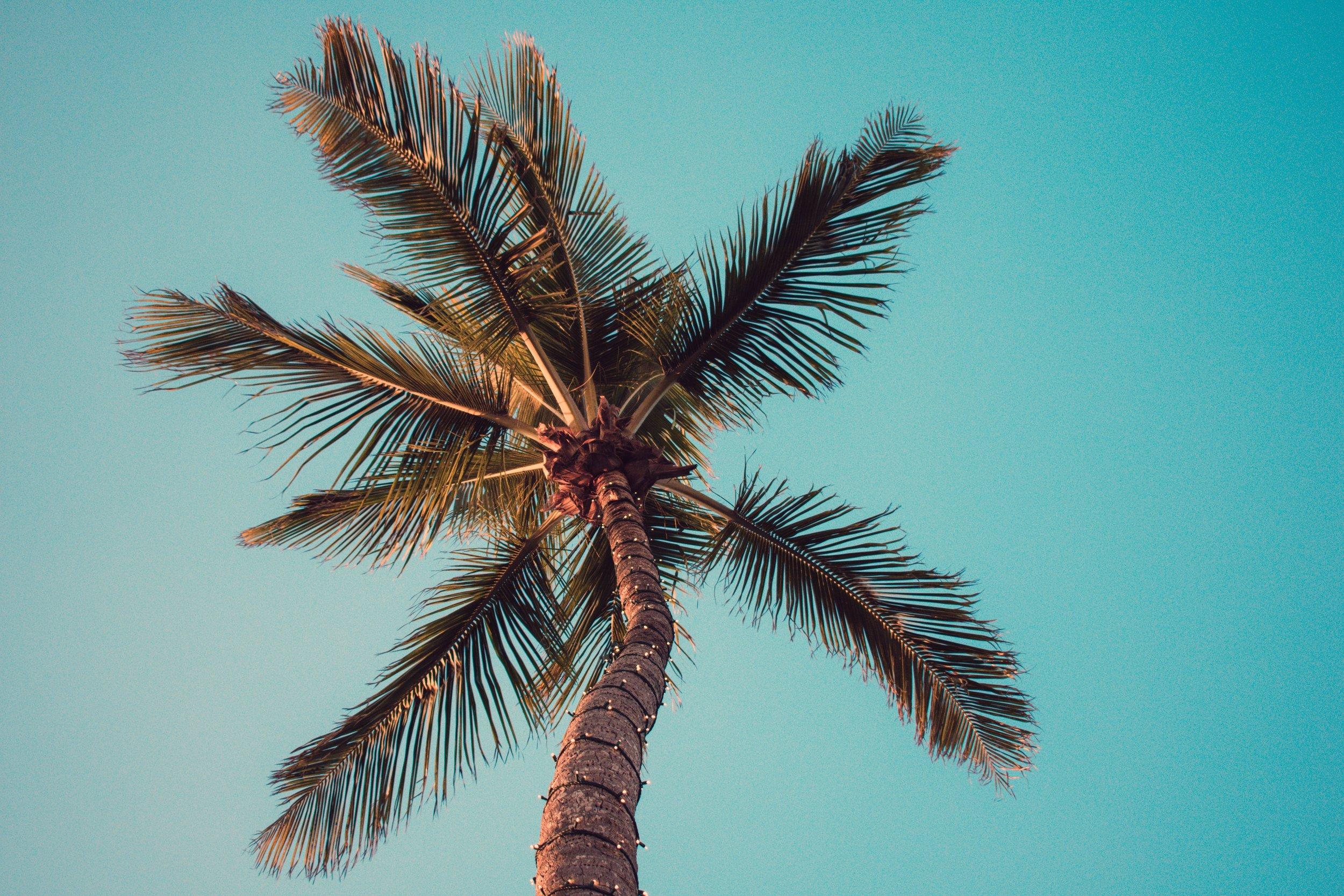 blue-sky-clear-sky-coconut-1068989.jpg